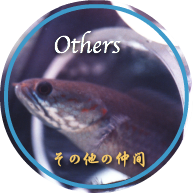 Other Fish