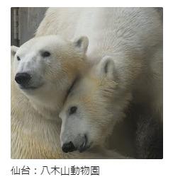 仙台:八木山動物園